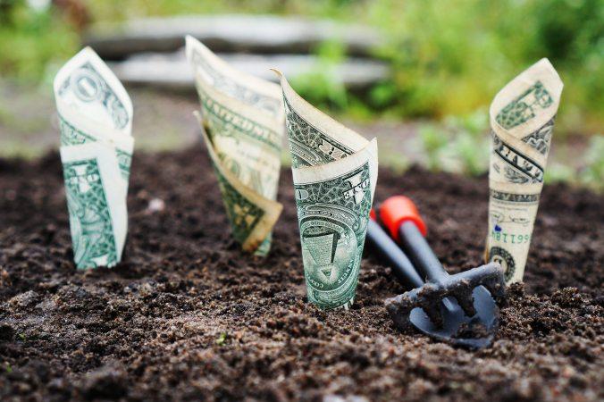 money soil.jpg
